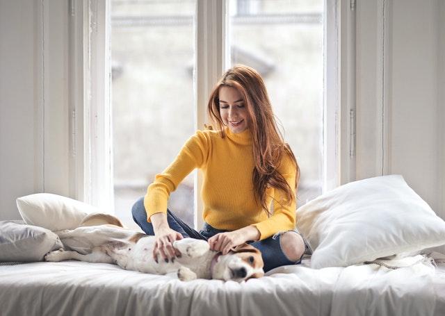 calvas en perros