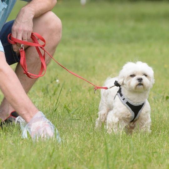 cacas de un perro sano