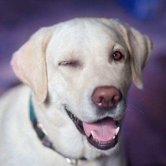 lentes de contacto para perros
